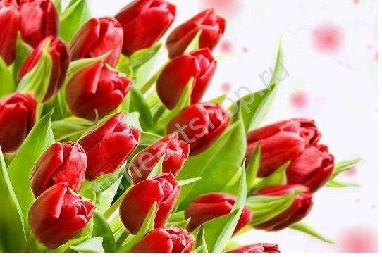 Красные тюльпаны, картина раскраска по номерам, на ...