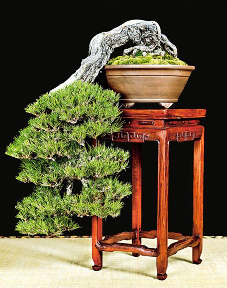 Pin By 王仁三郎 出口 On パーラダイス Pinterest Bonsai And Plants