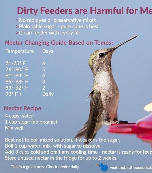 Pin By Lindsay On Outdoor Idea S Humming Bird Feeders Bird Garden Nectar Recipe