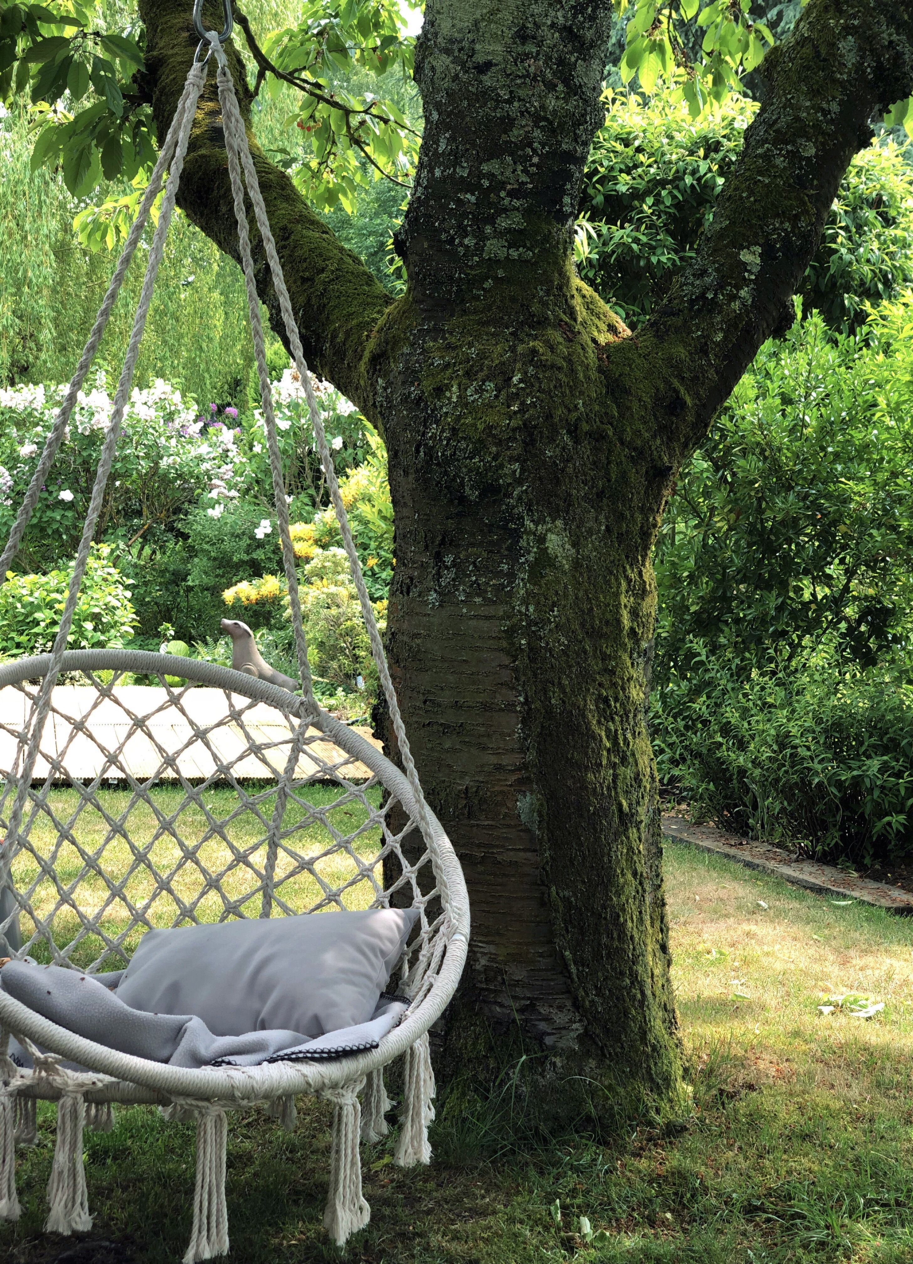 hanging chair tree purple velvet dining chairs relaxing underneath an old beautiful cherry garden moments hammock heaven
