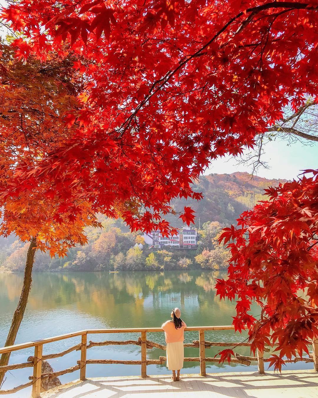 Autumn In Korea🇰🇷🍂❤️ W Travelgram Korea Koreabyme