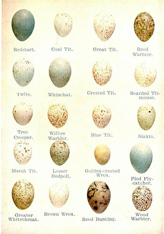 Egg identification chart very interesting also avante garde thoughts rh pinterest