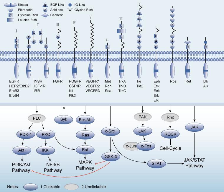 Receptor tyrosine kinases rtks are very important signaling receptor tyrosine kinases rtks are very important signaling pathway which not only ccuart Images