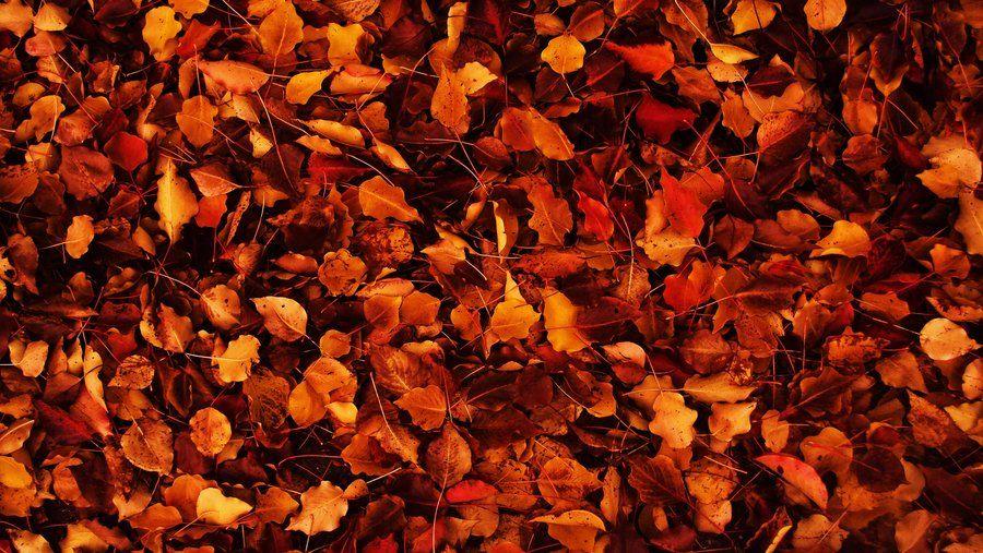 Tumblr Wallpaper Thanksgiving Wallpaper Autumn Leaves