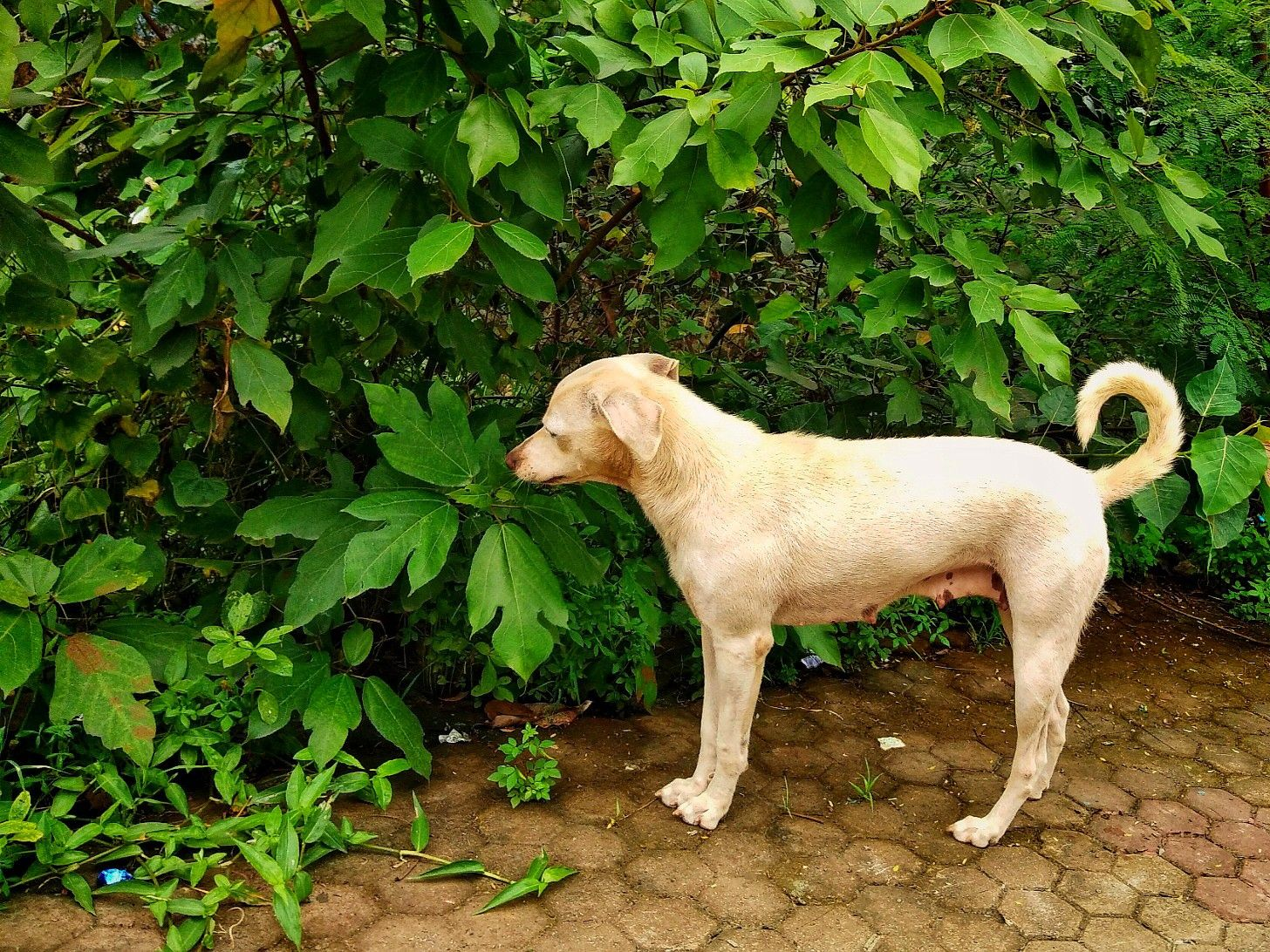 Street Dog. Wildlife. Street dogs, Dogs, Animals