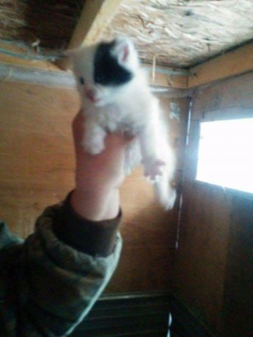 Kijiji chaton à donner