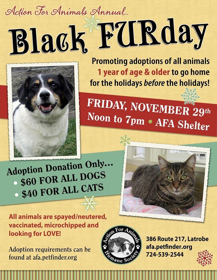 Black Furday Pet Event Animal Shelter Dog Rescue Fundraising