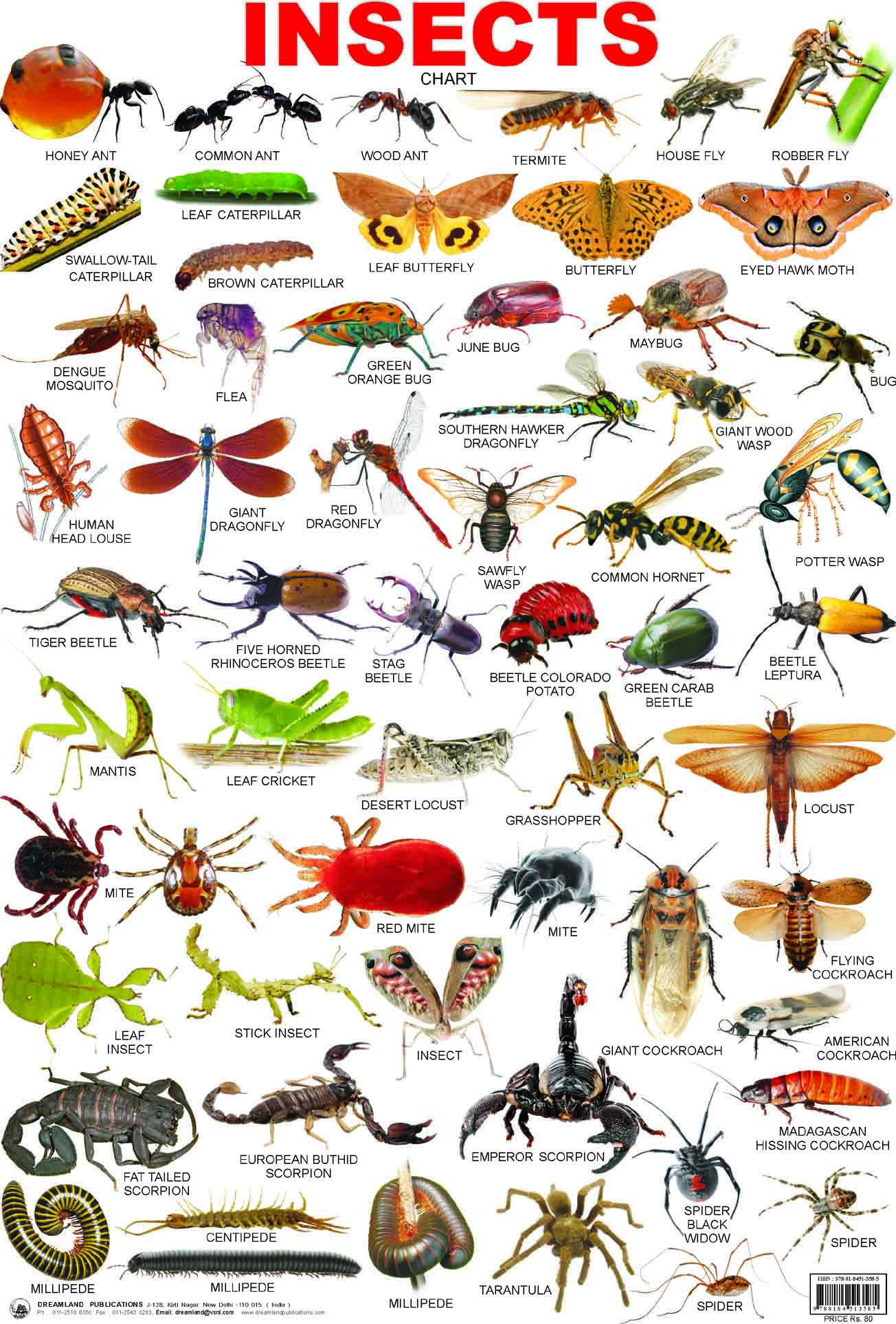 wild animals pictures with names in english pdf