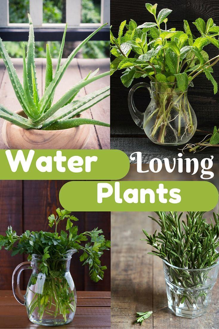 Water Loving Plants Plants grown in water, Plants, Water