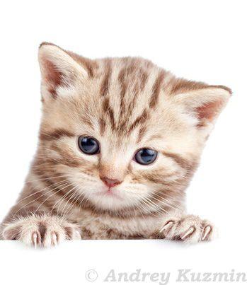Susses Katzenfoto Kittens Cutest Feline Cats