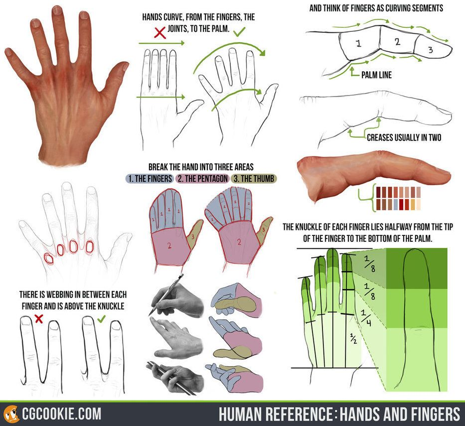 Human Reference: Hands and Fingers by CGCookie   Figure Drawing ...