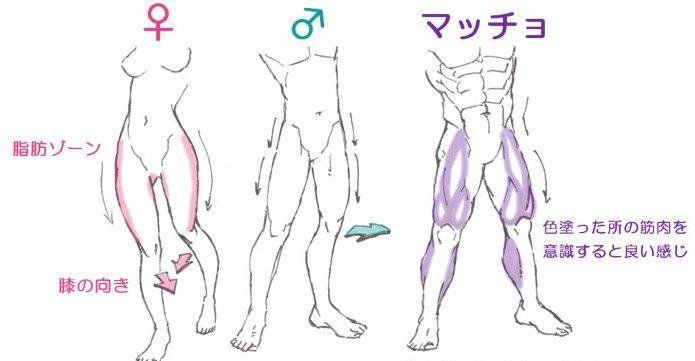 Media preview   Anatomia   Pinterest   Anatomía, Dibujo y Piernas
