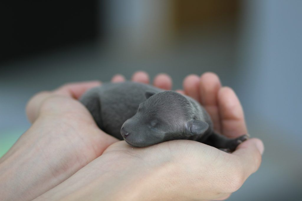Picture Of A Newborn Baby Dog Newborn Puppies Baby Dogs
