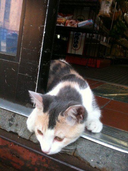 Bushwick kitty, snooping around    (Tipster)