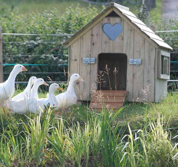 Small Classic Duck House