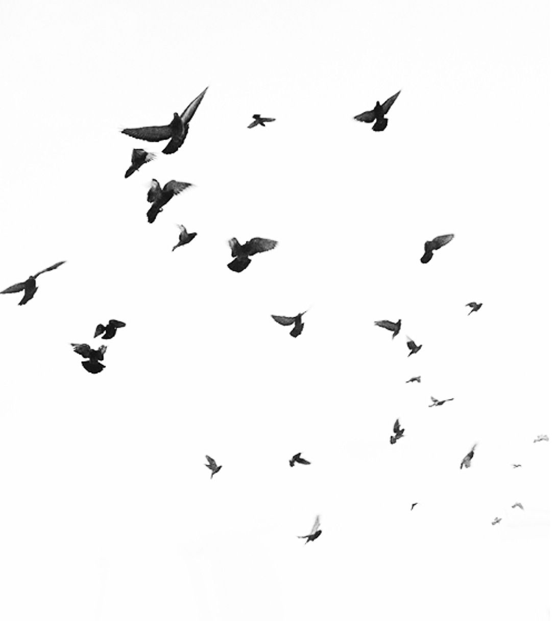 Pin By Starypastel On H E A L Birds Flying Photoshop Photography Techniques