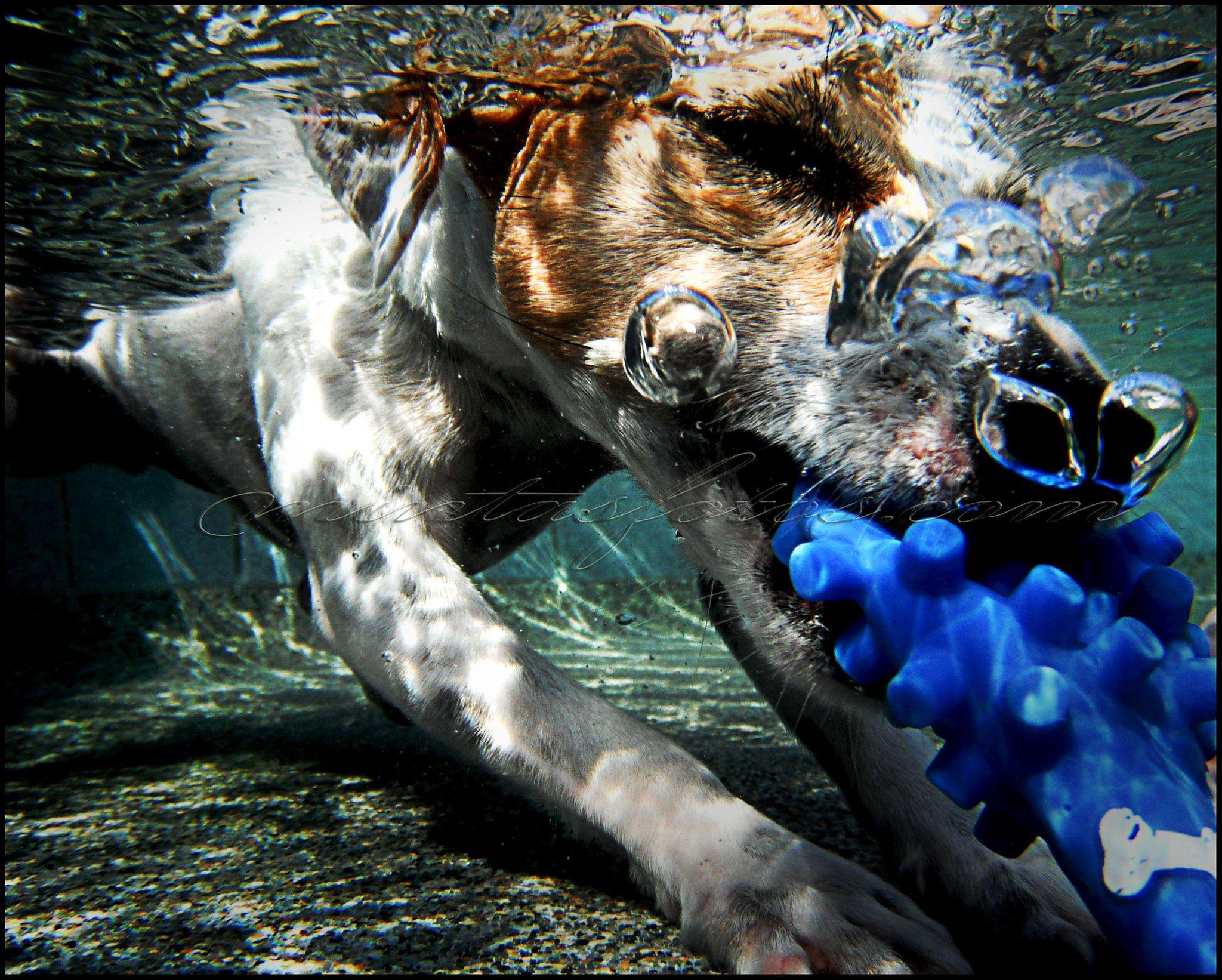 Booboo underwater nose bubbles