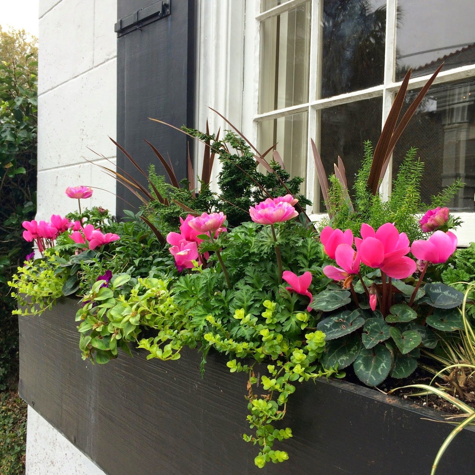 Window Box Planter Ideas: THE DEFINITIVE GUIDE TO WINDOW BOX DESIGN
