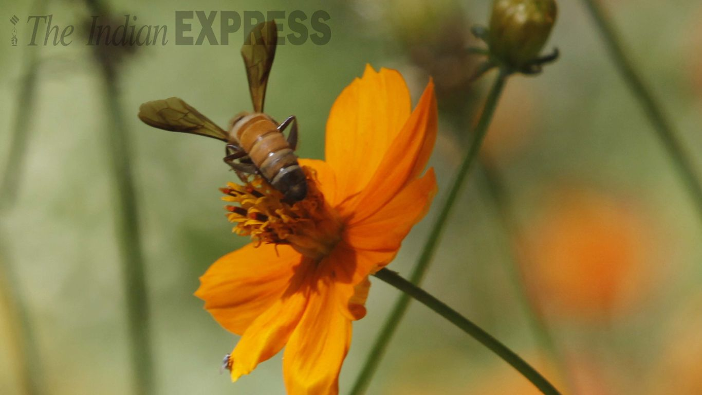 A wasp in an Ahmedabad garden #Nature