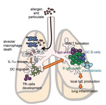 Specific molecular events that could explain allergic reactions to air pollution   Respro® Bulletin Board