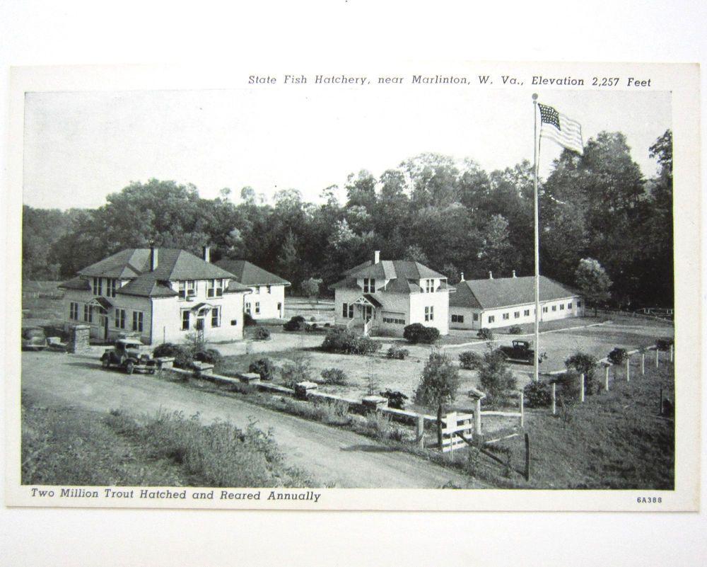 Postcard marlinton west virginia wv state fish hatchery for Virginia fish hatchery