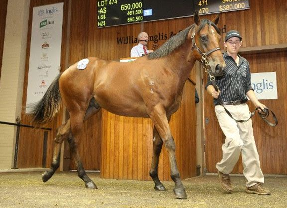 The three days of the Inglis Premier Yearling Sale's session one drew to a close in Melbourne Tuesday, with a Blue Gum Farm-consigned son of Snitzel (Aus) providing a late highlight to the sale when …