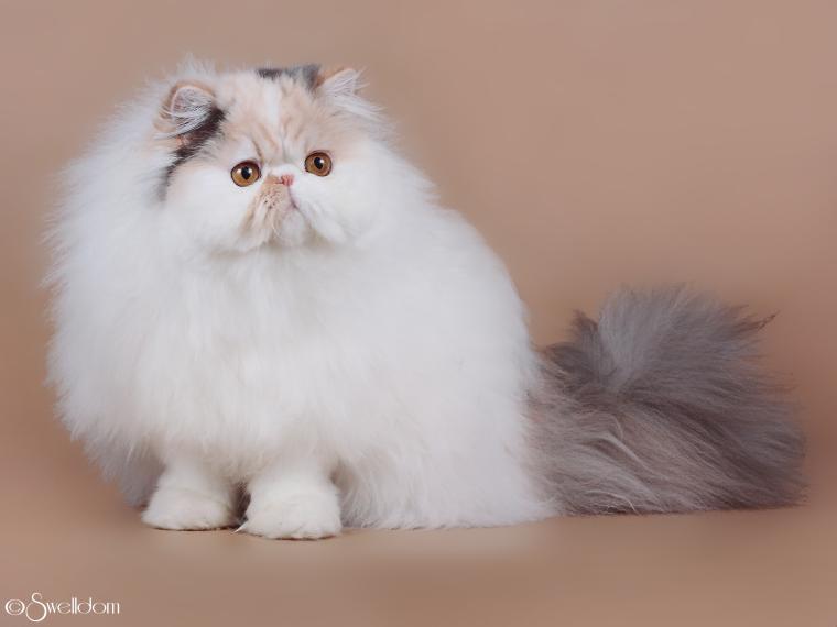 """Selenwey"" Cattery Beautiful cats, Pretty cats, Cute"