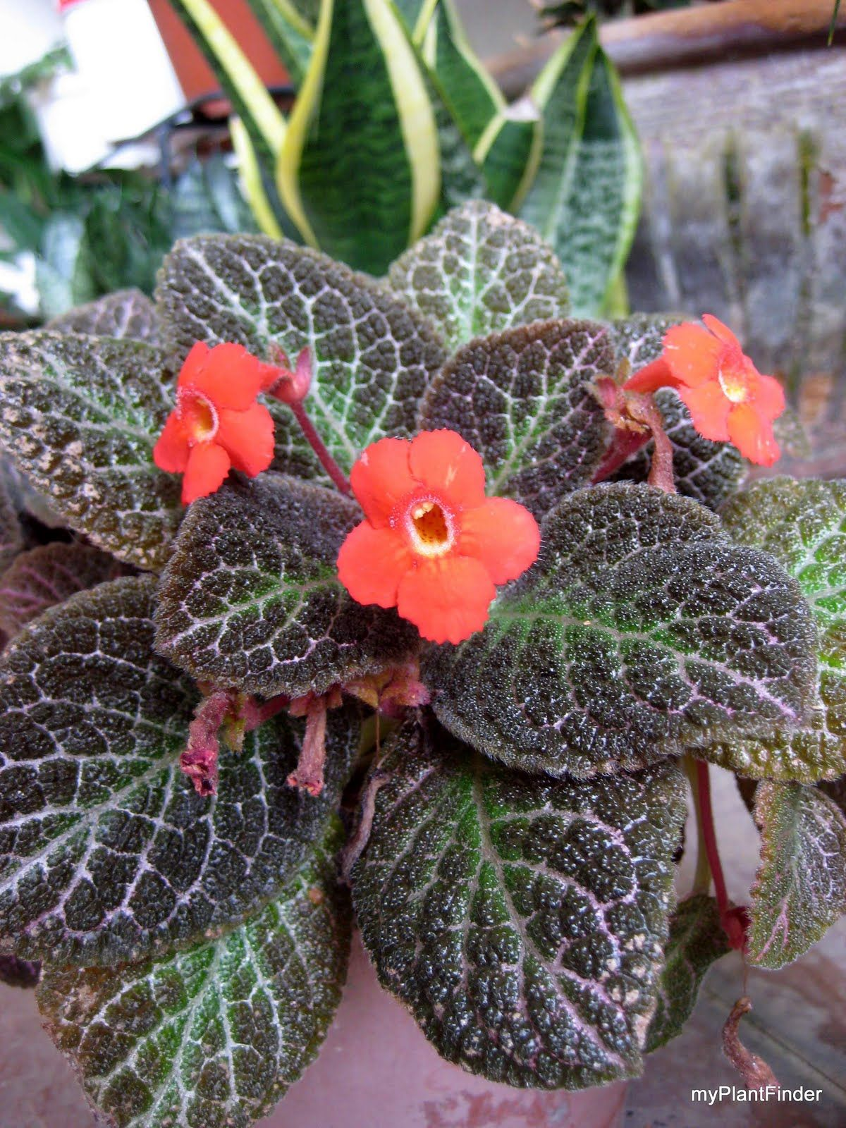 Tonis) Begonias * Episcias * Quilts * Hobby & Pets