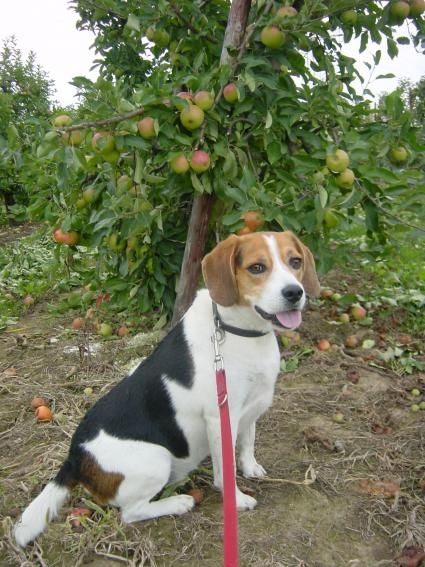 EVANA IndiaVICTORY! 70 Beagles Rescued From Tests! Time