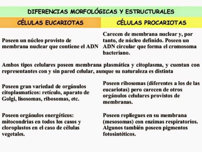 Cuadros Comparativos Diferencias Entre Células Procariotas Y Eucariotas Cuadro Comparativo Células Procariotas Clases De Celulas Celulas