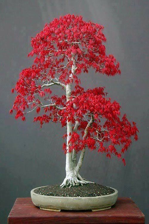 #beautiful #bonsai #favorite #trees