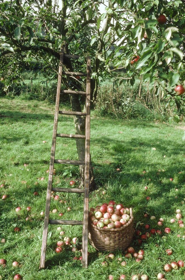 The Best Farms and Orchards for Apple Picking in the U.S.