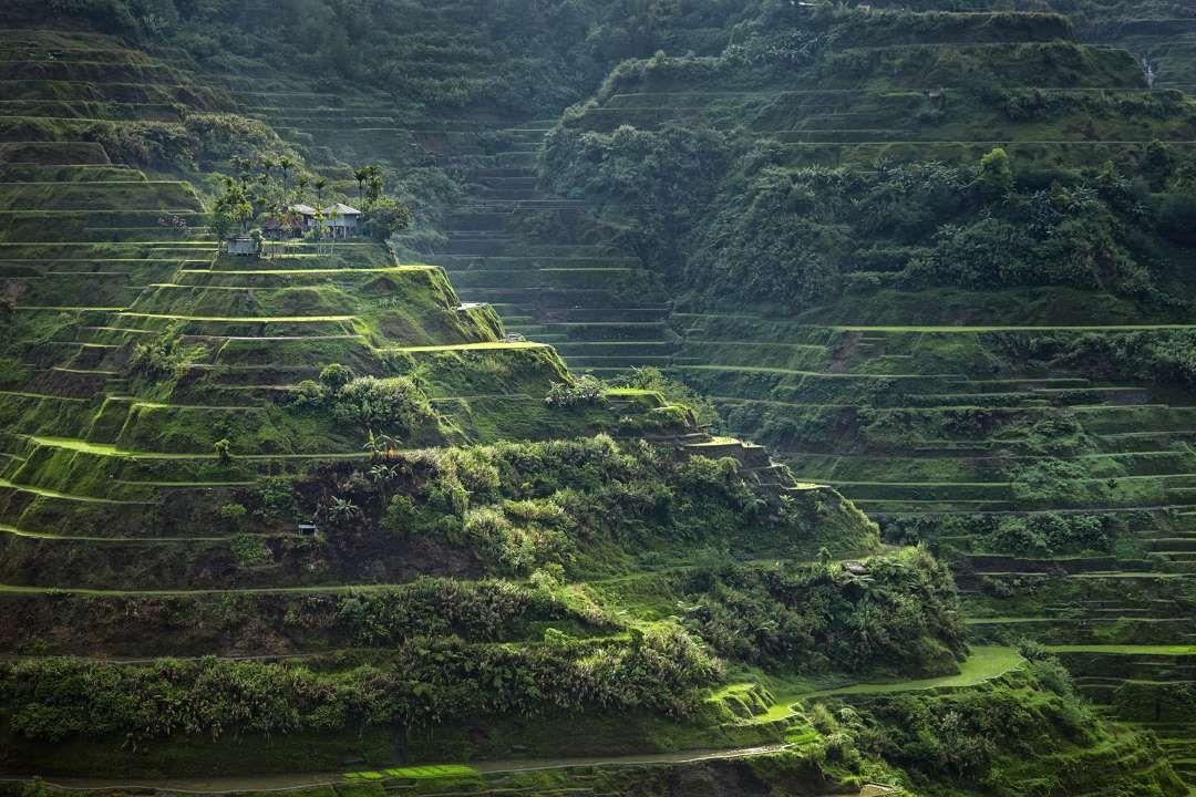 Rice Terraces of the Philippine Cordilleras - Alex Robinson/Getty Images