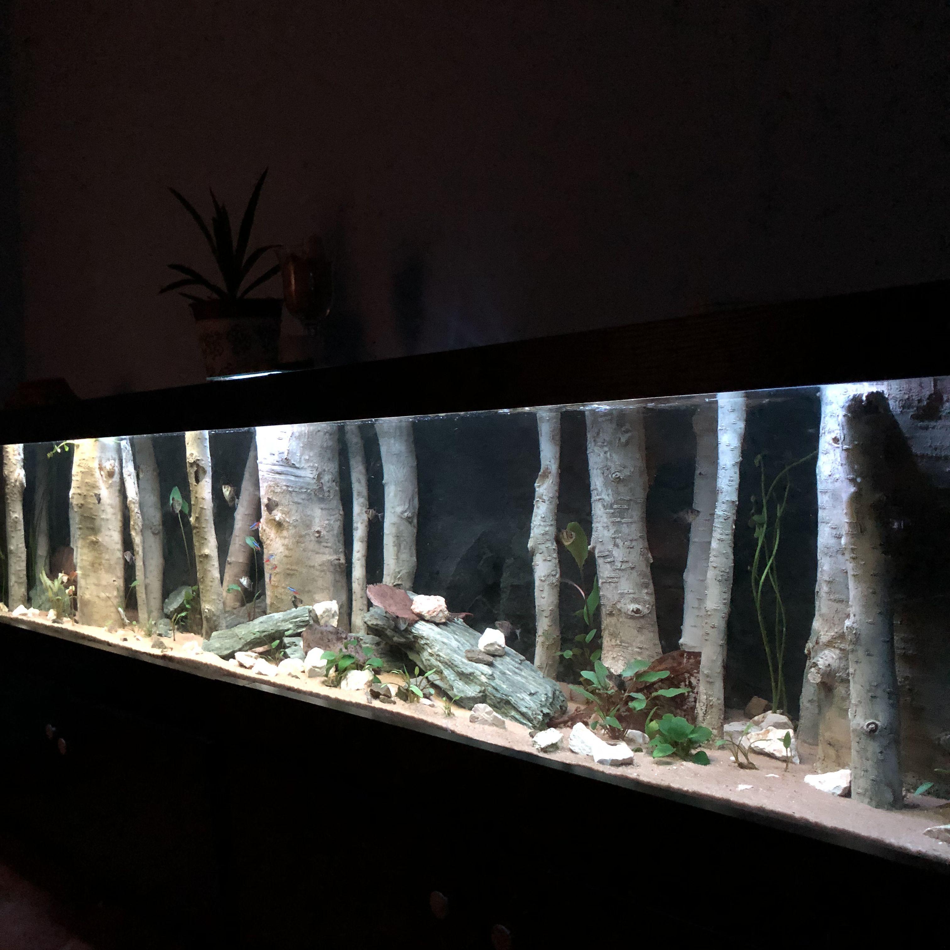 3d Aquarium Backgrounds Fish Tank Decorations Aquadecor Fresh Water Fish Tank Aquarium Backgrounds Aquarium Landscape