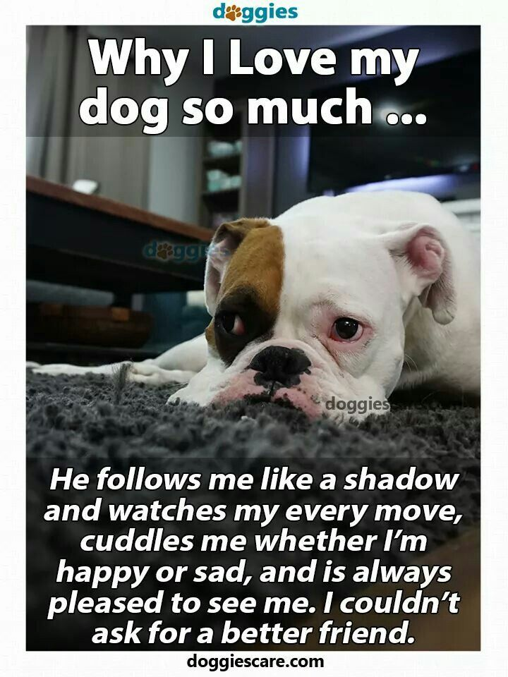 Why I Love My Dog So Much Share And
