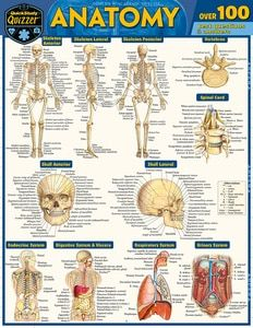15+ QuickStudy   Anatomy Quizzer Laminated Study Guide