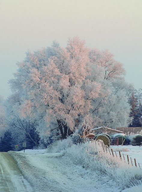 Frost repaints the Iowa landscape in white.
