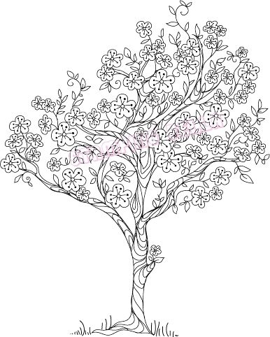 Cherry Blossom Tree Tree Drawing Tree Coloring Page