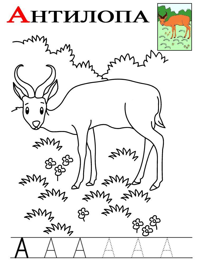 Буква А в названии животных | Алфавит, Прописи, Азбука
