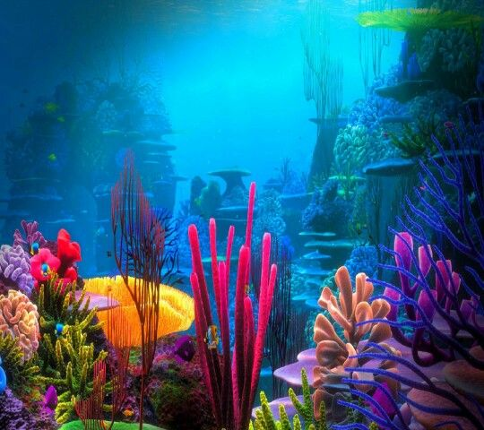 Deep sea what a wonderful world in 2019 underwater wallpaper aquarium backgrounds - Sea coral wallpaper ...