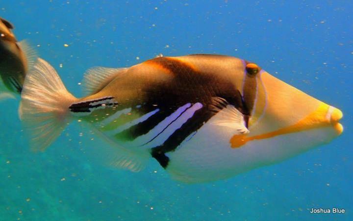 Timeline Photos Ocean Defender Hawaii Facebook Maui Travel Ocean Under The Sea