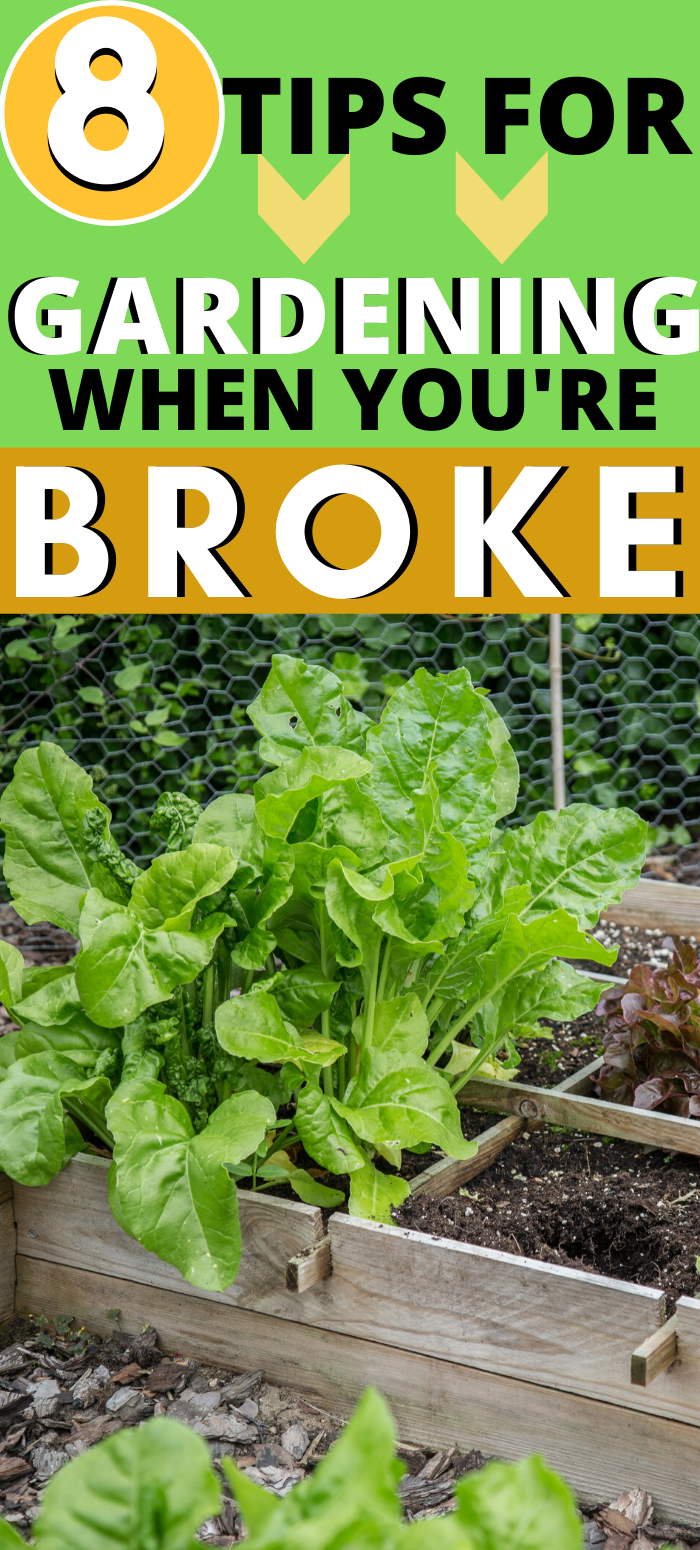 8 Gardening When You're Broke Tips is part of Garden care, Veggie garden, Lawn and garden, Vegetable garden raised beds, Food garden, Veg garden - Short on cash  Don't worry; here are 9 tips for gardening when you're broke  You can still start a garden even if you don't have a lot of cash