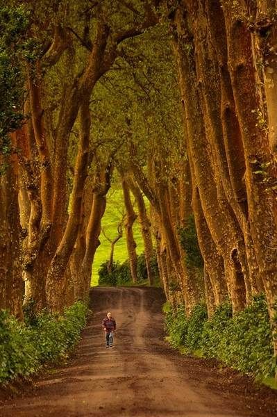 15 fotos incríveis que lhe vão dar vontade de visitar Portugal: Nossa Senhora dos Remédios, Açores