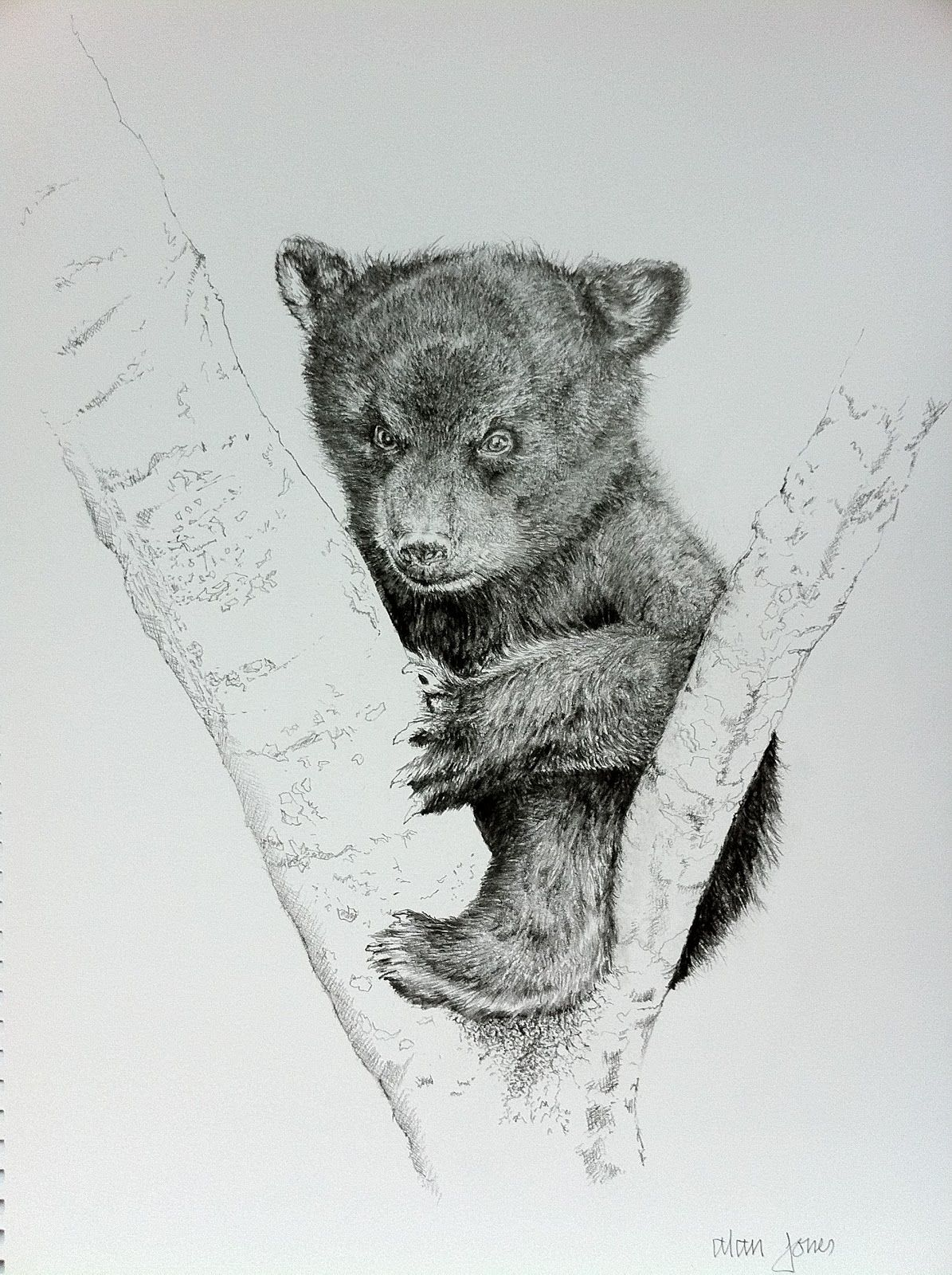 Black Bear Sketches Pencil Sketch