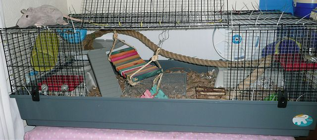 My Syrian Hamster cage! (A meshed Ferplast 140) Hamster