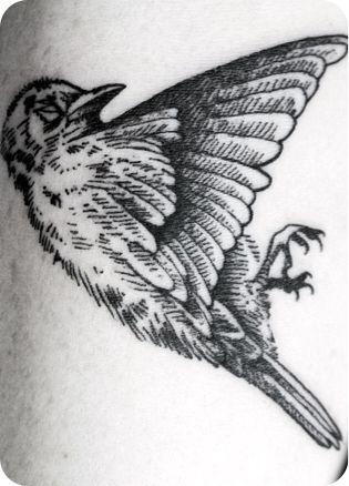 Un pájaro muerto azul