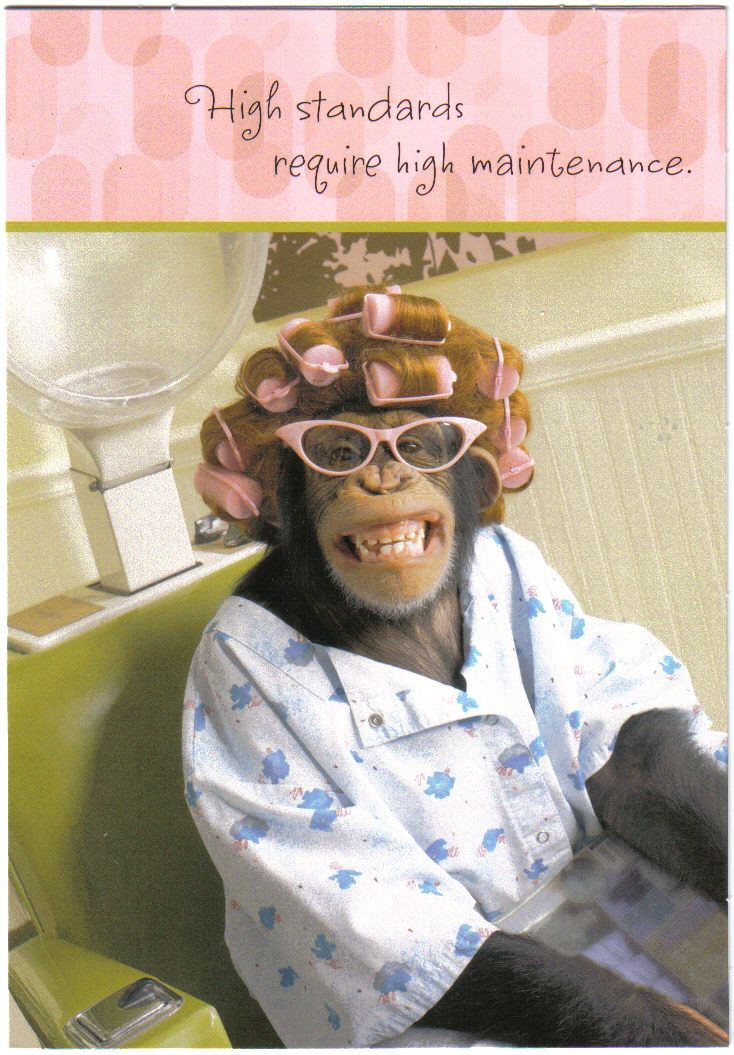 chimp in curlers tshirt Google Search | Happy birthday