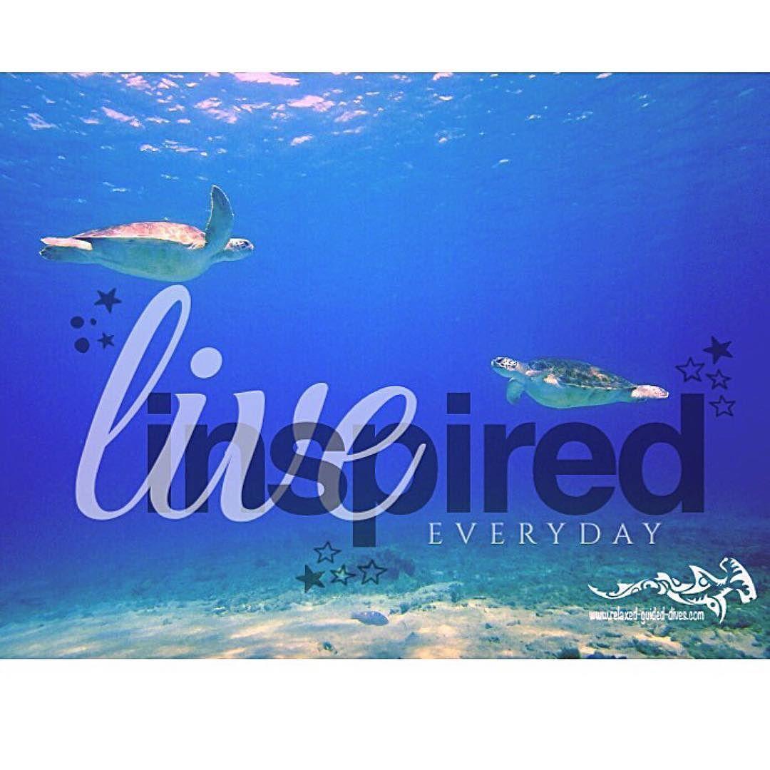 Every day we enjoy ...  #relaxedguideddives #scuba #diving #fun #tauchen #curacao #turtle