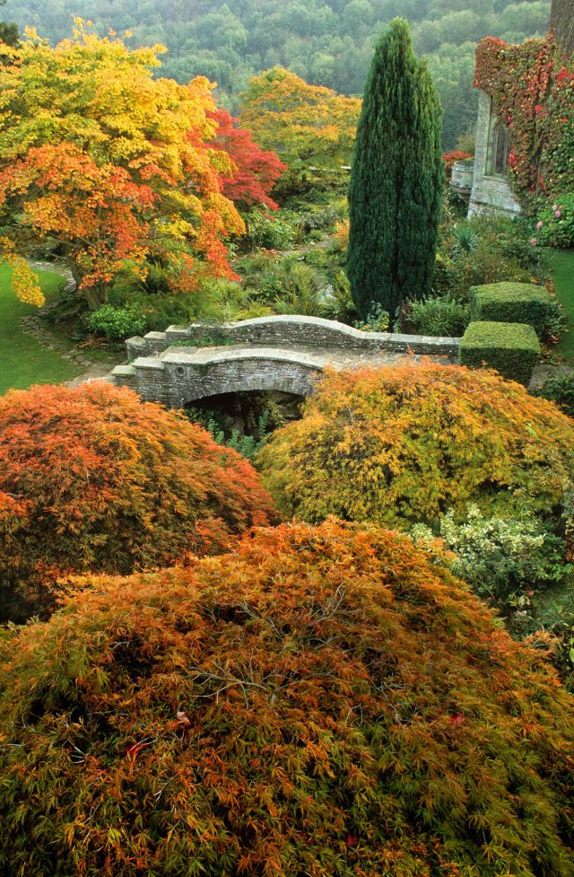 6 acer tree varieties and care tips Acer trees, Garden