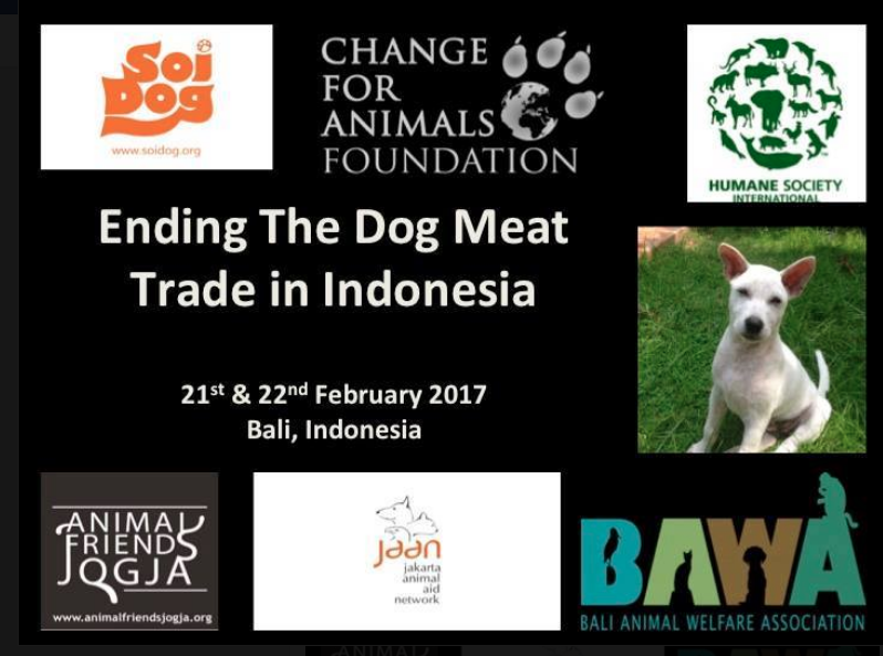 Tackling The Dog Meat Trade In Indonesia In February Soi Dog Staff Participated In A 2 Day Strategic Planning Meeting Dog Help Dogs Charitable Organizations